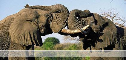 Mwea National Reserve Day Trip Safari is a 3 hour journey to Mwea National Reserve about 180 kilometers from Nairobi. The reserve is located northwest of Kamburu Dam at the Mwea National Reserve within Mbeere in Eastern Province – Embu County.