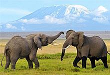 2 Days 1 Night Amboseli National Park from Mombasa Island Safari