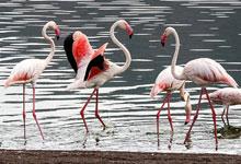 2 Days 1 Night Lake Bogoria Road Safari from Nairobi