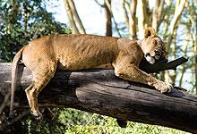 2 Days 1 Night Lake Nakuru National Park Safari from Kisumu City