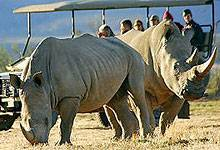 2 Days 1 Night Lewa Downs Conservancy Safari from Nairobi