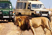 2 Days 1 Night Masai Mara Game Reserve Road Safari from Nairobi