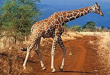 2 Days 1 Night Meru National Park Safari from Nairobi
