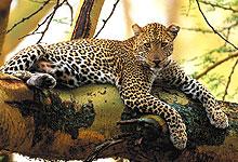 2 Days 1 Night Lake Nakuru National Park Road Safari from Nairobi