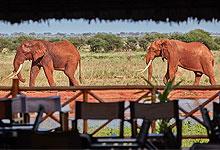 2 Days 1 Night Safari Ngutuni + Ngangao Forest & Taita Hills Safari