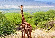 2 Days 1 Night Ruma National Park Safari from Kisumu City