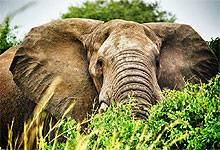 2 Days 1 Night Shimba Hills National Reserve from Mombasa Island Road Safari