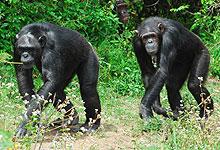 2 Days 1 Night Sweetwaters Game Sanctuary, Laikipia Safari from Nairobi