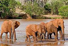 2 Days 1 Night Tsavo East National Park Safari from Mombasa