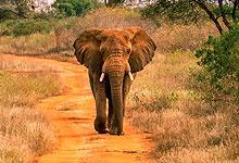 2 Days 1 Night Tsavo West National Park Safari from Nairobi