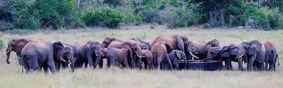 Malindi Day Trip Arabuko-Sokoke Forest Nature Walks