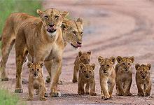 12 Days 11 Nights Kenya Safari Holidays & Road Trips