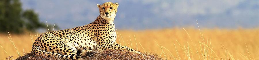 2 Days 1 Night Kisumu Masai Mara Road Safari