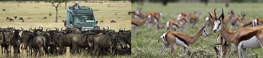 Masai Mara Safari 2 Days 1 Night Kenya Road Trip