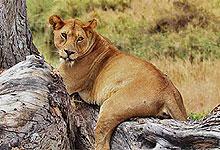 4 Days 3 Nights Kenya safaris by road