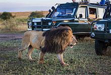 5 Days 4 Nights Kenya Safaris by road