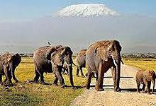 6 Days 5 Nights Kenya Safaris by road