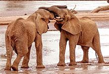 9 Days 8 Night Kenya Safaris & Tour Packages by Road