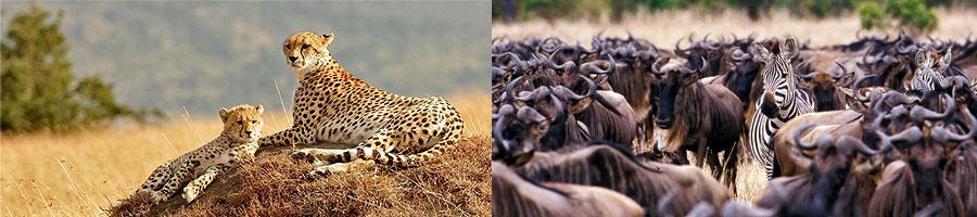2 Days 1 Night Mombasa Amboseli National Park Safari