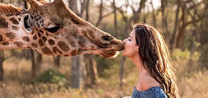 David Sheldrick Elephant Orphanage Giraffe Centre Nairobi Tour