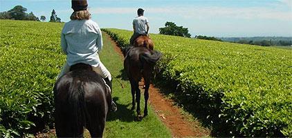 Nairobi Horse Riding Day Tour Kawamwaki Farm Limuru