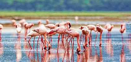 Lake Elementaita 1 Day Trip Safari
