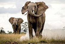 2 Days 1 Night Olkeramatian Conservancy Fly-in Safari from Nairobi