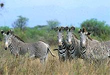 2 Days 1 Night Meru National Park Fly-in Safari from Nairobi