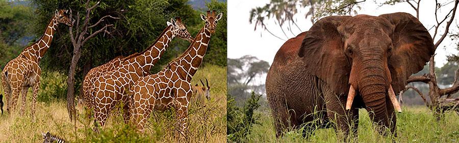 Meru National Park 2 Days 1 Night Luxury Flying Safari