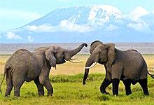 2 Days 1 Night Amboseli National Park Fly-in Safari from Mombasa