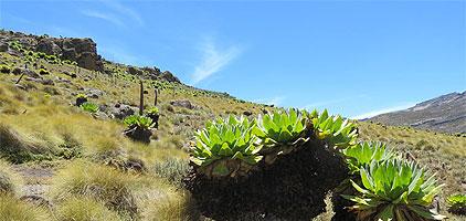Mount Kenya Day Trip Hike Sirimon Route