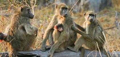 Mwea National Reserve Day Trip Safari
