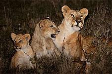 Nairobi National Park Night Game Drive – Kenya