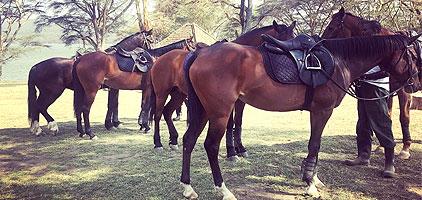 Naivasha Horse Back Riding Tours