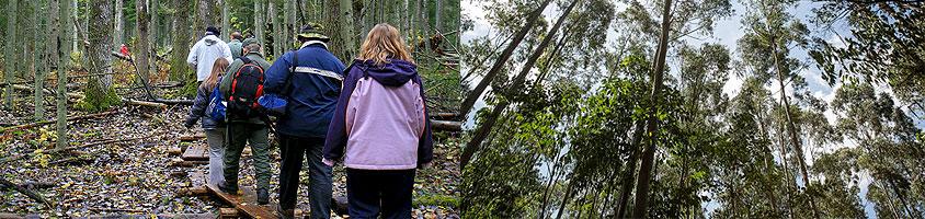 Ngong Forest Sanctuary Nairobi Walking Day Tour