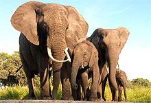2 Days 1 Night Tsavo West National Park Fly-in Safari from Nairobi