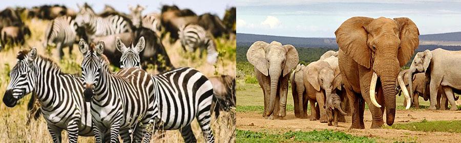 Amboseli National Park Flying Safari 3 Days 2 Nights