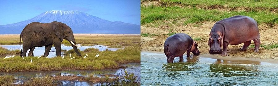 Amboseli Masai Mara Fly-in Safari 4 Days 3 Nights