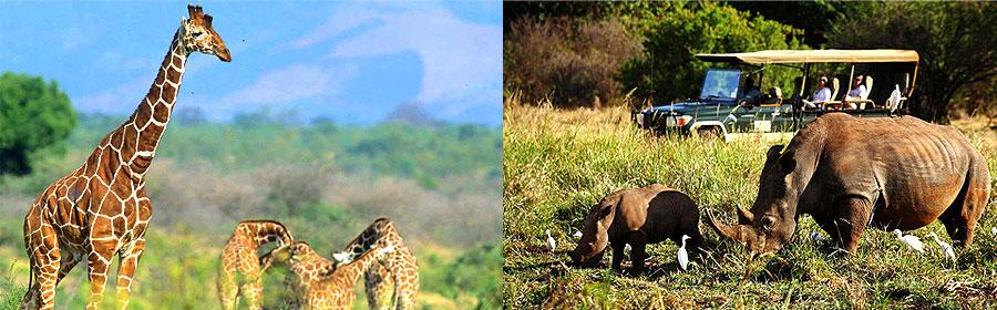 4 Days Elsas Kopje Meru National Park Flying Holiday Safari