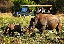 4 Days 3 Night Elewana Elsa's Kopje Meru National Park Fly-in safari from Nairobi