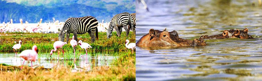 Lake Nakuru 2 Days 1 Night Luxury Flying Safari