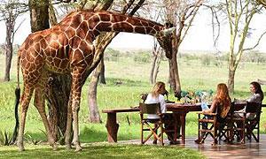 6 Days 5 Nights Kenya Fly-in Safari to Lewa Conservancy Masai Mara From Nairobi