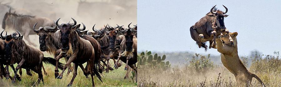 3 Days 2 Nights Mombasa Masai Mara Flying Holiday Safari