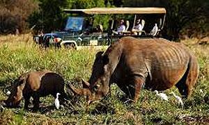 5 Days 4 Nights Kenya Safari Meru & Masai Mara Fly-in Holiday From Nairobi