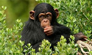 Uganda Wildlife Conservancies
