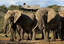 4 Days 3 Night Ol Donyo Lodge (Chyulu Hills) Fly-in Safari from Nairobi