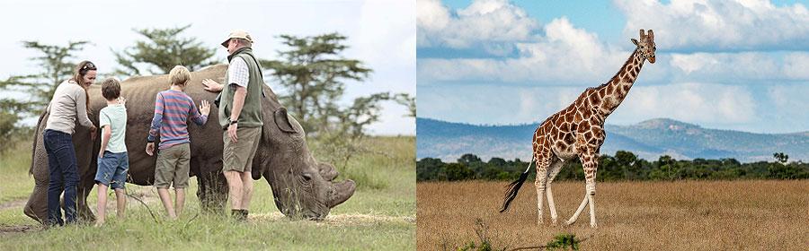 6 Days 5 Nights Kenya Fly-in Safari Sweetwaters Olpejeta Masai Mara