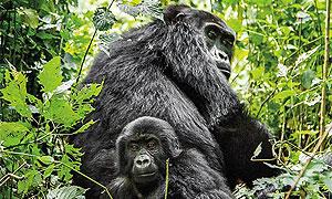 Rwanda Wildlife Conservancies