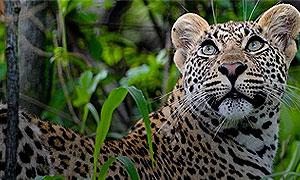 5 Days 4 Nights Kenya Safari Samburu & Masai Mara Fly-in Holiday From Nairobi
