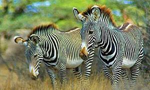 6 Days 5 Nights Kenya Fly-in Safari Samburu Game Reserve & Masai Mara Holiday from Nairobi